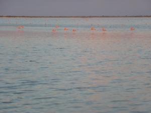 20121122 flamingos